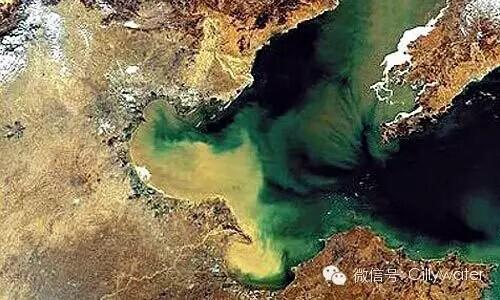 渤海环境恶化几成死海