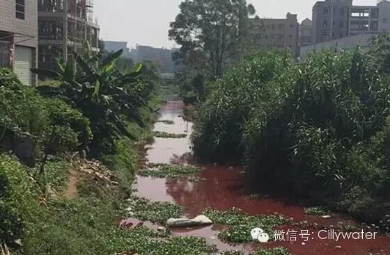 网友喊环保官员下河游泳